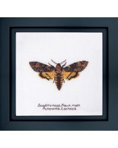 Thea Gouverneur Death's-head Haak moth 563a borduren