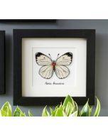 Vervaco borduurpakket Witte vlinder borduren van La maison Victor pn-0165233